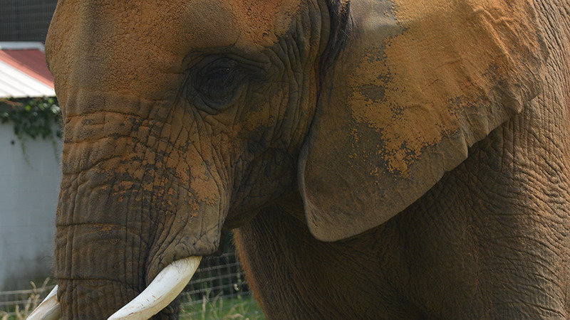 Petition 183 End Asha The Elephant S Lifetime Of Abuse And