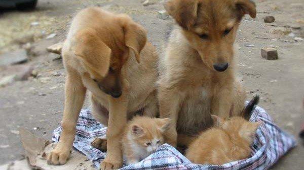 Днем, картинки с надписями с котятами и собаками