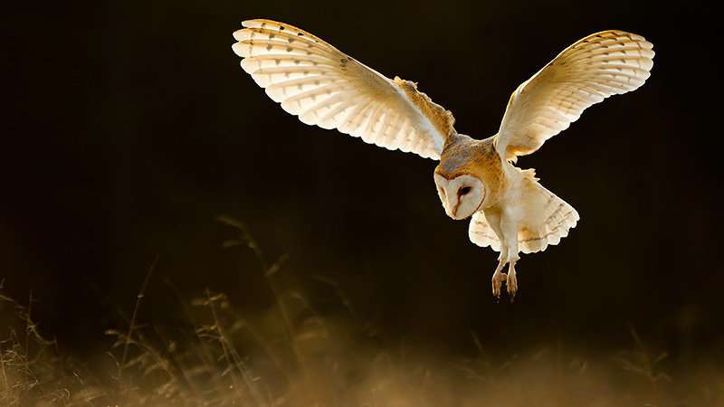 Petition · Kathryn McGarry: Help Save the Barn Owl from ...