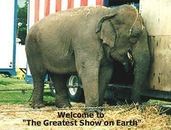animal punishment through circuses essaytyper