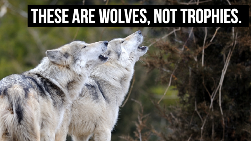 Wolves, Change.org