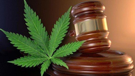 Petizione · Parlamento Italiano, Istituzioni e Partiti Politici: Totale Liberalizzazione della Pianta di Cannabis · Change.org