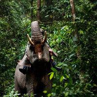 Petition Kmart Save The Sumatran Elephant And Dont