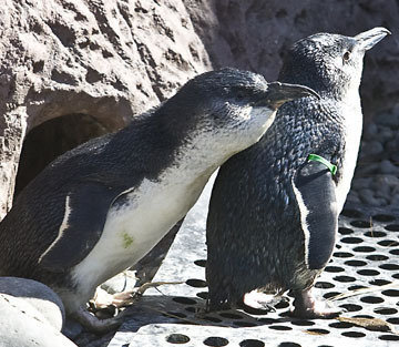 petition save the penguins the hole in the rock change org