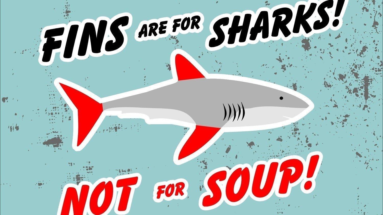 Petition · Ban shark fin soup in Philadelphia · Change.org