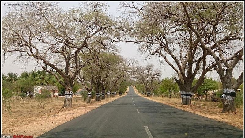 Petition · Tamilnadu government: Trees being cut down for highway
