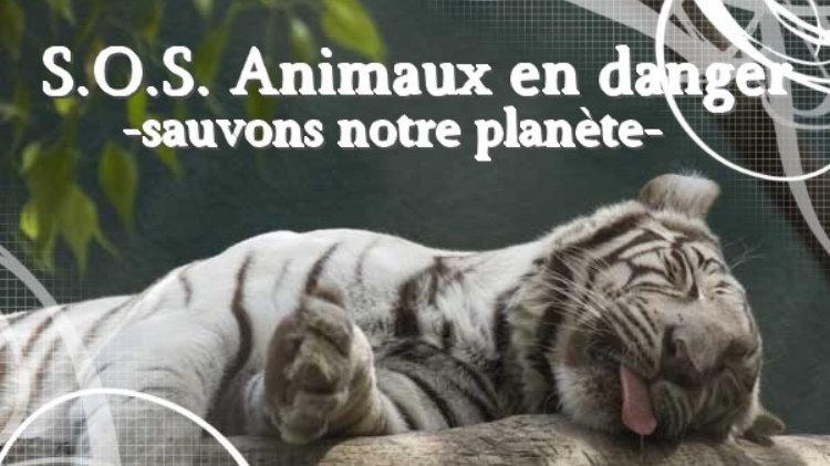 Petition S O S Animaux En Voie D Extinction Change Org