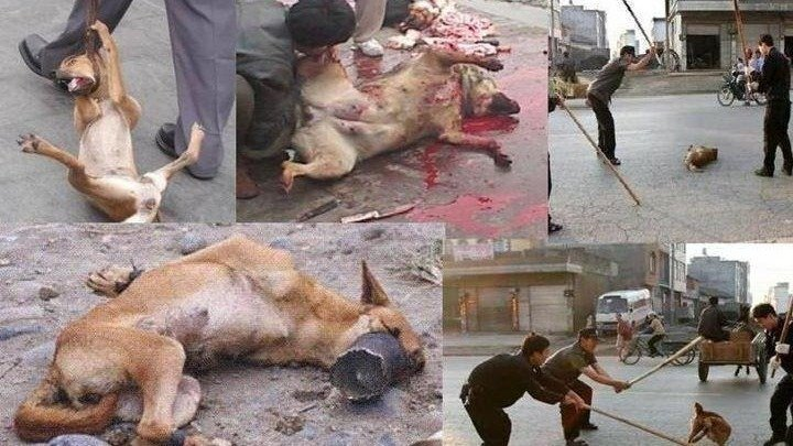 How China Kill The Dogs To Eat Them
