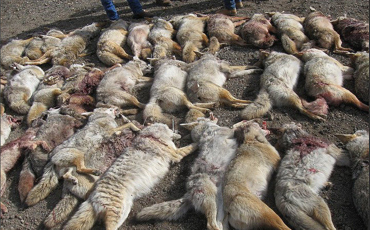 Petition ca dept of fish wildlife f g commission for Mass fish and wildlife