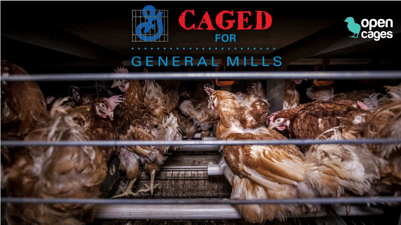 animal farm supporters and contributors Find the quotes you need in george orwell's animal farm, sortable by theme, character, or chapter from the creators of sparknotes.