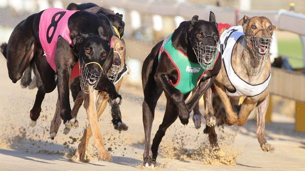 Greyhound Results Australia