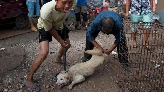 Chinese Restaurant Dog Meat New York