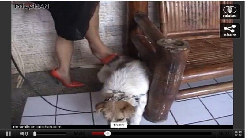 Investigate and find out this dog abuser in philippines 183 change org