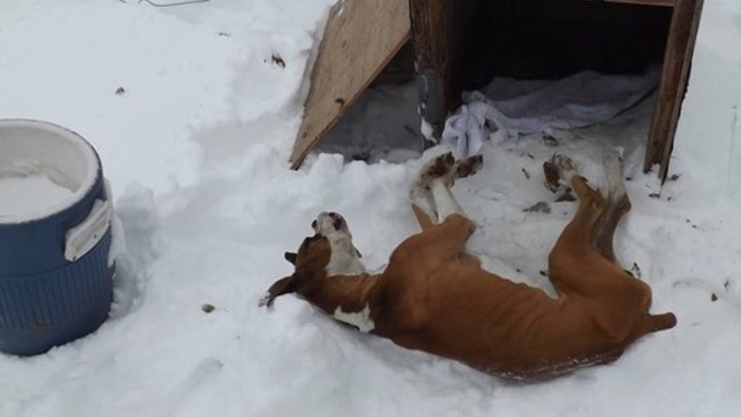 Do Dogs Get Cold Sleeping Outside