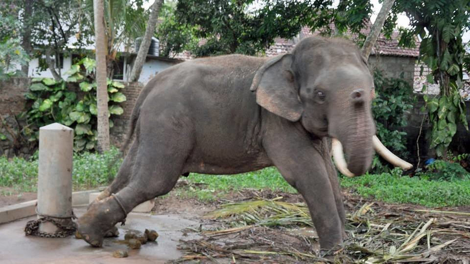 wild animals in captivity Is animal captivity wrong over a year ago by tauriq moosa animals behind cages, starving and dying, is an awful sight it's an image that underlines the.