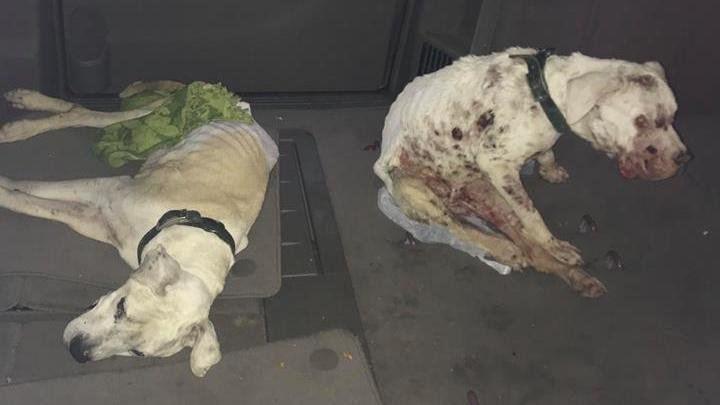 Petition 183 6 Neglected Dogs 2 Dead In Terril Iowa 183 Change Org