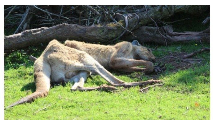 Petition 183 Rspca David Gill Of South Lakes Safari Zoo To