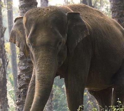 Petisi Selamatkan Gajah Dari Kepunahan Change Org