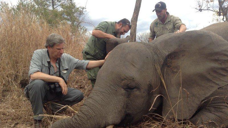STOP BRUTAL TROPHY HUNTERS SAVE THE ELEPHANTS