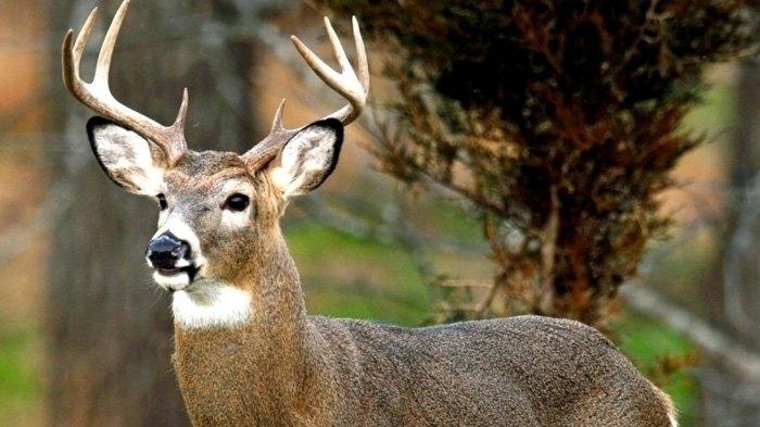 How To Get Easy Money >> Petition · Mndnr.gov: Move MN deer gun seasons back ...