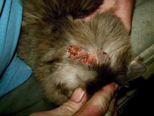 How Toxic Is Flea Medicine Cat