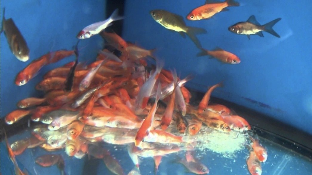 Petition walmart stop the walmart fish abuse for Types of fish at walmart