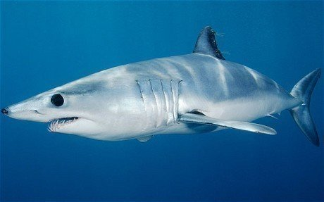 Petition syberg 39 s restaurants consider replacing shark for Sharks fish chicken birmingham al