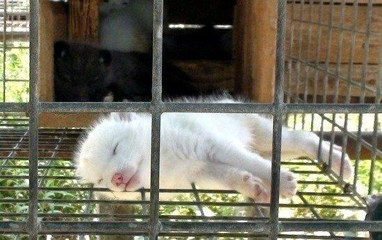 Petition update · Поздравим меховую фабрику с Днем Победы