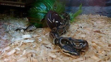 Petition · Petco: Change company policy on the care of reptiles