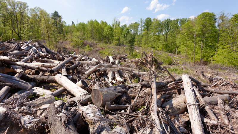 Petition · Save Wild Indiana! Limit Logging in State Forests