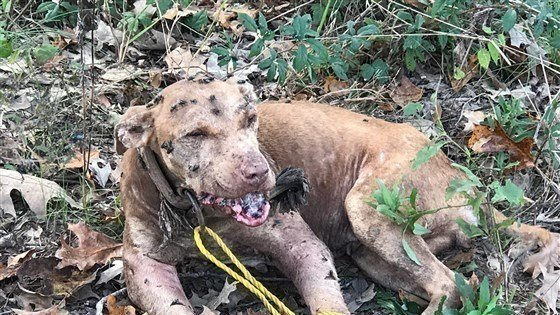 Petition · Adam's County Sheriff's Office: Help & Save the