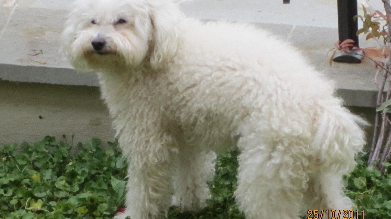 Petizione a gli organi statali permettere ai cani di for Marsupio per cani di piccola taglia
