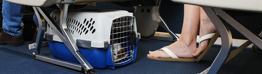 petition allow pets to travel in cabin when travelling