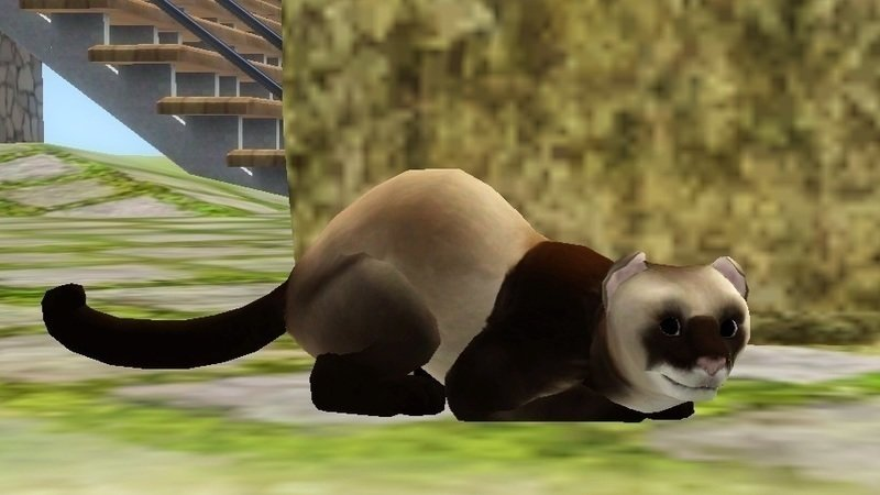 Petition · EA Games: Sims 4 Pets - Ferrets! · Change org