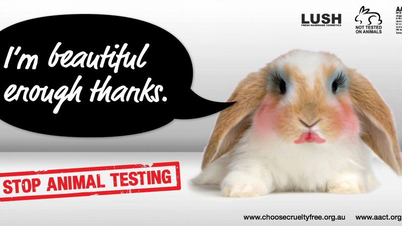 we should stop animal experimentation Thus, animals should be treated with the same respect as humans yet animals'  rights are violated when they are used in research because.