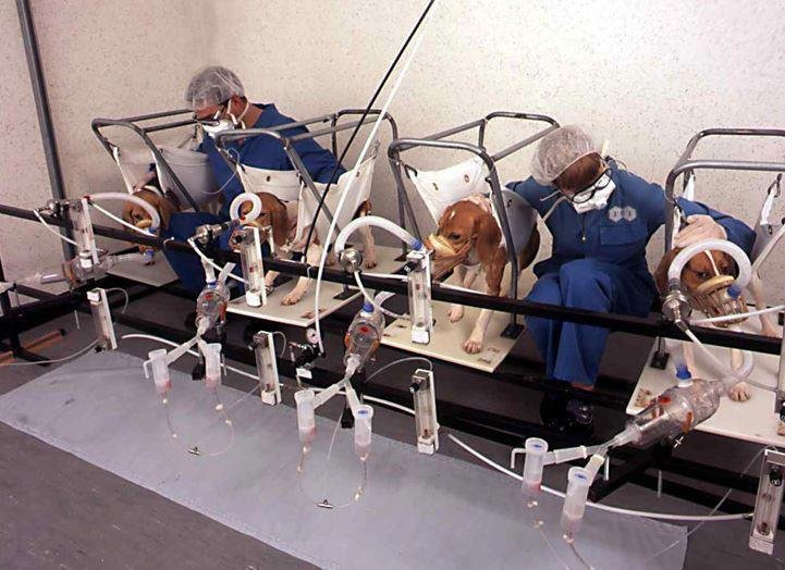 an argument in favor of testing on animals in medicine research