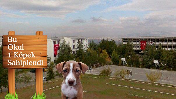 Kampanya Ankara Il Milli Eğitim Müdürlüğü Her Okulda 1 Köpek