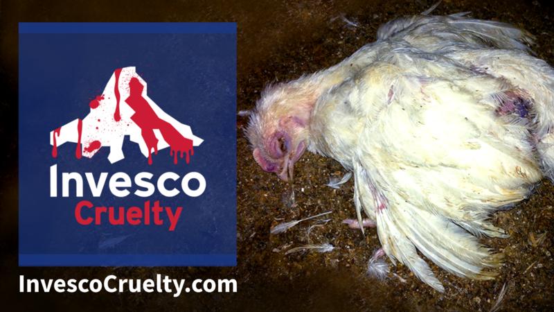 stop cruelty towards birds and animals