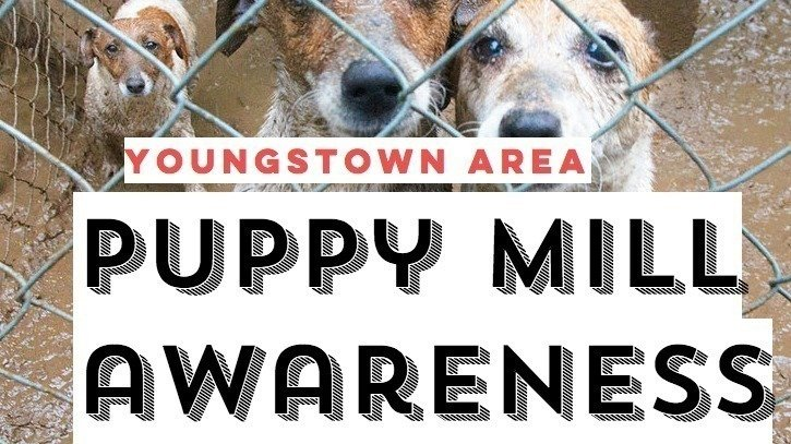 Petition · Mike DeWine: Pet Purchase Protection Laws in Ohio