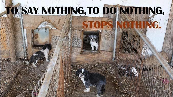 Petition · Commissioner Marcia Ward Winona County: Puppy