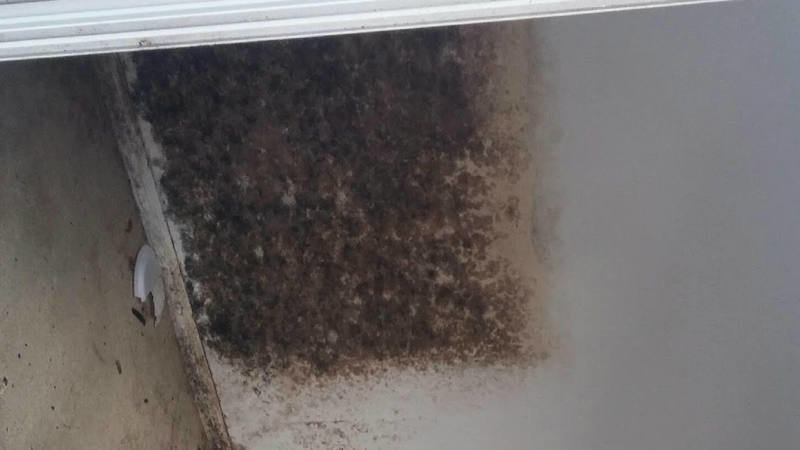 Petition · LANDLORD NEGLIGENCE AND LIABILITY ''MOLD EXPOSURE