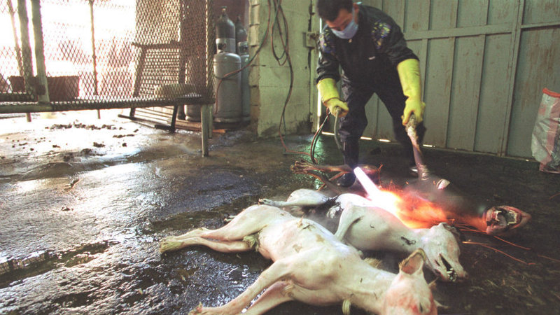 Cars That Start With D >> Petition · People for the Ethical Treatment of Animals (PETA): STOP YULIN DOG MEAT EATING ...