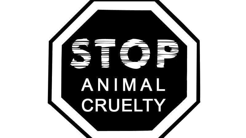 Petition · DEMAND FACEBOOK INCLUDES A REPORT ANIMAL CRUELTY BUTTON