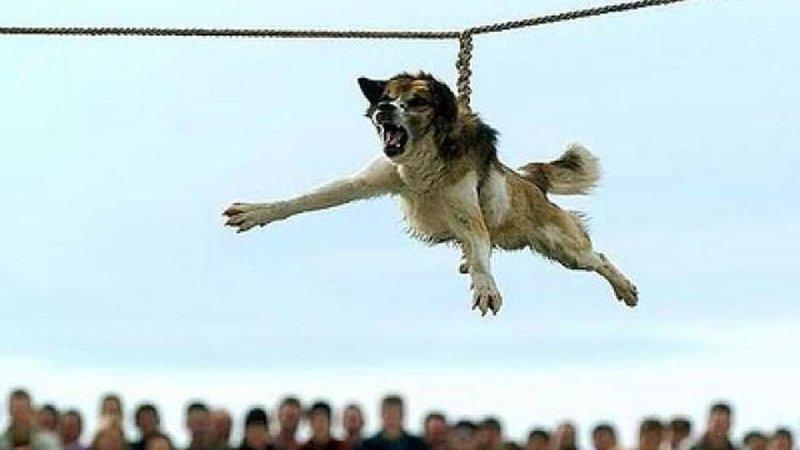 dog spinning ritual