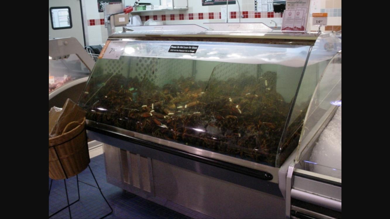 Petition · Michael Medline: Eliminate live lobster tanks ...