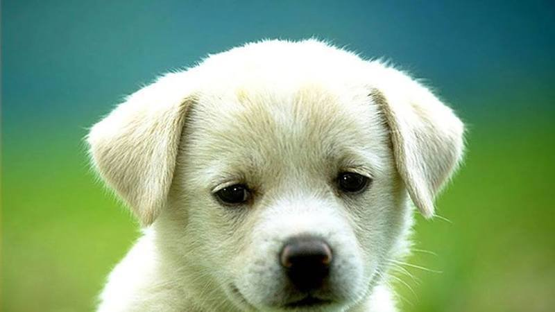Petition Update Chiot Chien Chaton Chat A Donner Et A Vendre Change Org