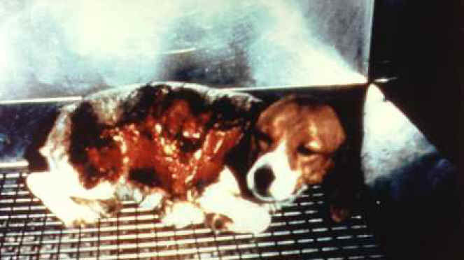 Petition 183 Justin Trudeau Save The Dogs Ban Testing Of