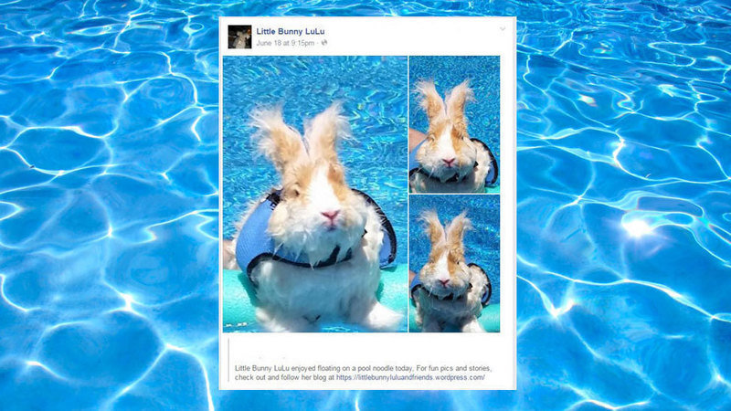 Petition Please Stop Promoting Rabbits In Swimming Pools