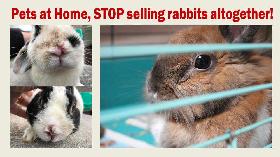Petition Pets At Home Stop Selling Rabbits Altogether Change Org