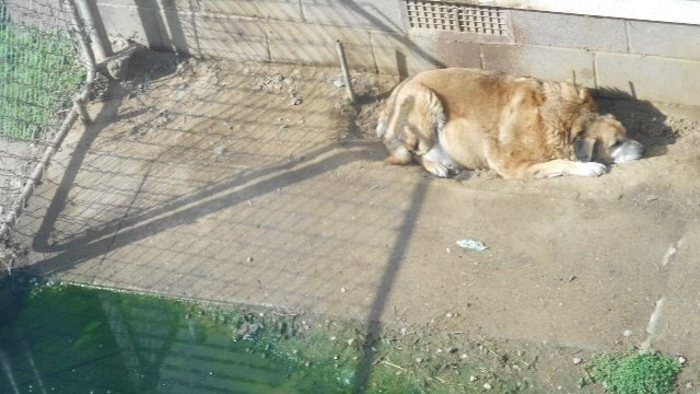 Petition free an old and sick dog from her neglectful Can a dog tell if another dog is sick